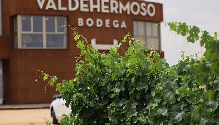 viñedos-valdehermoso-bodega-nava-del-rey